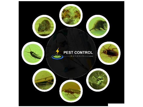 Pest Control Karabar