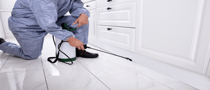 Hassle-free Spider Control Service