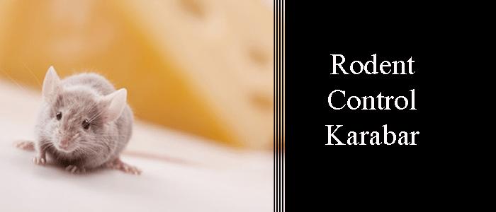Rodent Control Karabar
